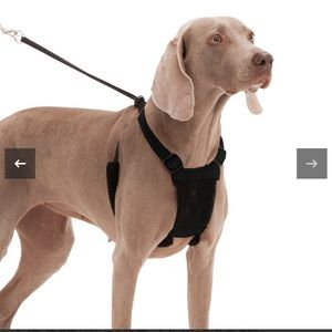 Sporn Dog Non-Pull Mesh Harness in BLACK LARGE